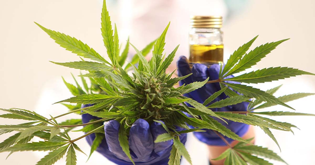 cannabis vs side effects of chemo